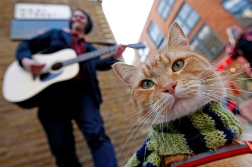 cat busker